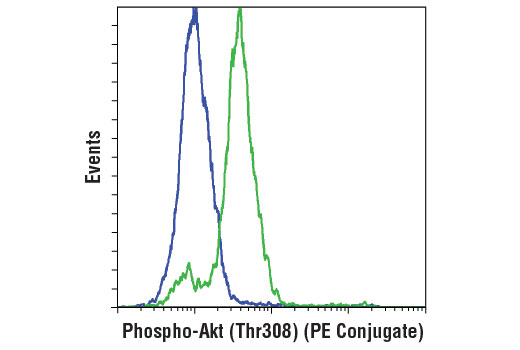 Flow cytometric analysis of serum-starved NIH/3T3 cells, untreated (blue) or treated with mouse platelet-derived growth factor BB (200 ng/ml, 10 min; green), using Phospho-Akt (Thr308) (D25E6) XP ® Rabbit mAb (PE Conjugate).