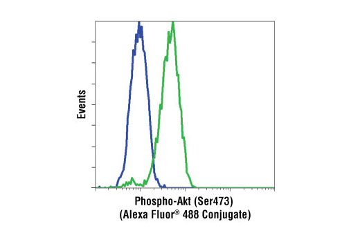 Flow cytometric analysis of Jurkat cells, untreated (green) or LY294002 and wortmannin treated (blue), using Phospho-Akt (Ser473) (193H12) Rabbit mAb (Alexa Fluor ® 488 conjugate).