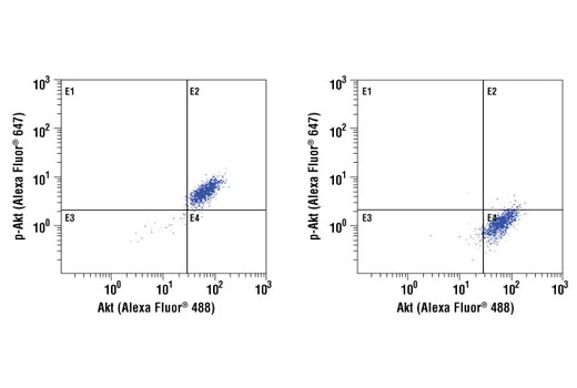 Flow cytometric analysis of Jurkat cells, untreated (left) or or treated with LY294002, wortmannin and U0126 (right), using Akt (5G3) Mouse mAb (Alexa Fluor ® 488 Conjugate) and Phospho-Akt (Ser473) (D9E) Rabbit mAb (Alexa Fluor ® 647Conjugate) #4075.
