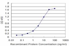 ELISA: 12-Lipoxygenase Antibody (2D10) [H00000239-M01] - Detection limit for recombinant GST tagged ALOX12 is approximately 0.3ng/ml as a capture antibody.