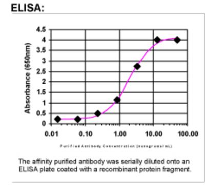ELISA: 12 Lipoxygenase Antibody [27860002]