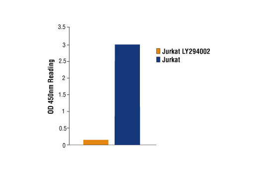 Figure 1: Phospho-Akt1 (Ser473) is detected in untreated Jurkat cells, where as no signal is detected with treatment with LY294002 , a specific PI3 Kinase inhibitor using PathScan ® Phospho-Akt1 (Ser473) Sandwich ELISA Kit #7160.