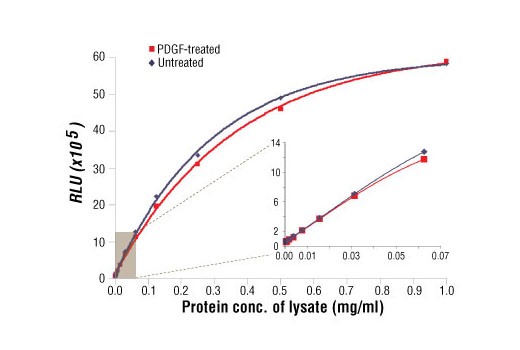 Relationship between protein concentration of lysates from untreated and PDGF-treated NIH/3T3 cells and immediate light generation with chemiluminescent substrate is shown. Cells (80% confluence) were treated with PDGF #9909 (50 ng/ml) and lysed after incubation at 37ºC for 20 minutes. Graph inset corresponding to the shaded area shows high sensitivity and a linear response at the low protein concentration range.