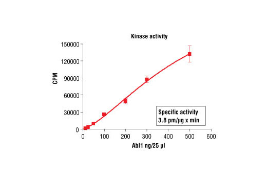 Figure 1. Abl1 kinase activity was measured in a radiometric assay using the following reaction conditions: 60 mM HEPES-NaOH, pH 7.5, 5 mM MgCl2, 5 mM MnCl2, 3 µM Na-orthovanadate, 1.2 mM DTT, 100 µM ATP, 100 µM Signal Transduction Protein (Tyr160) Biotinylated Peptide (#1366) and variable amount of Recombinant Abl1. Reaction mixture incubated at room temperature for 10 minutes.