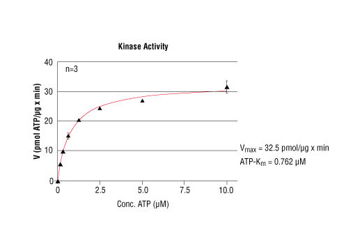 Figure 5. ABL1 kinase activity was measured in a radioisotopic filtration assay using the following reaction conditions: 60 mM HEPES-NaOH, pH 7.5, 3 mM MgCl2, 3 mM MnCl2, 3 uM Na-orthovanadate, 1.2 mM DTT, ATP (variable), 2.5 ug / 50 ul PEG20.000, Substrate: PolyAEKY, 5 ug / 50 ul, Recombinant ABL1: 5 Units / 50 µl.