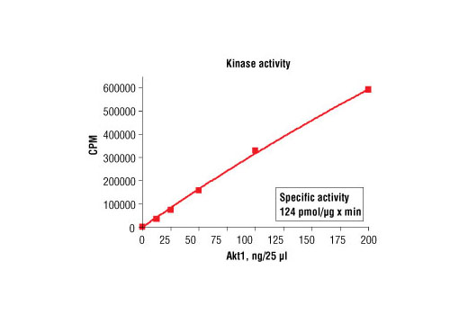 Figure 1. Akt1 kinase activity was measured in a radiometric assay using the following reaction conditions: 5 mM MOPS, pH 7.2, 2.5 mM β-glycerophosphate, 1 mM EGTA, 0.4 mM EDTA, 5 mM MgCl2, 0.05 mM DTT, 50 μM ATP, Substrate: Akt-substrate peptide 200 ng/μL, and variable amount of recombinant Akt1.