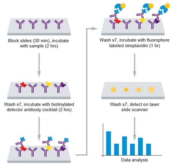Assay Summary for Equine Cytokine Antibody Array - Quantitative (10 targets) (ab197413).
