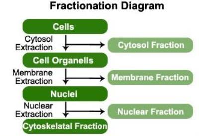 Subcellular Protein Fractionation Kit [NBP2-47659]