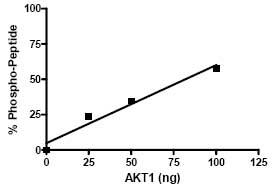 Kinase assay: Specific activity 12.32 pmol/min/µg